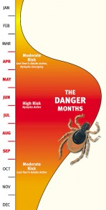 Active Periods for Ticks Throughout the Year