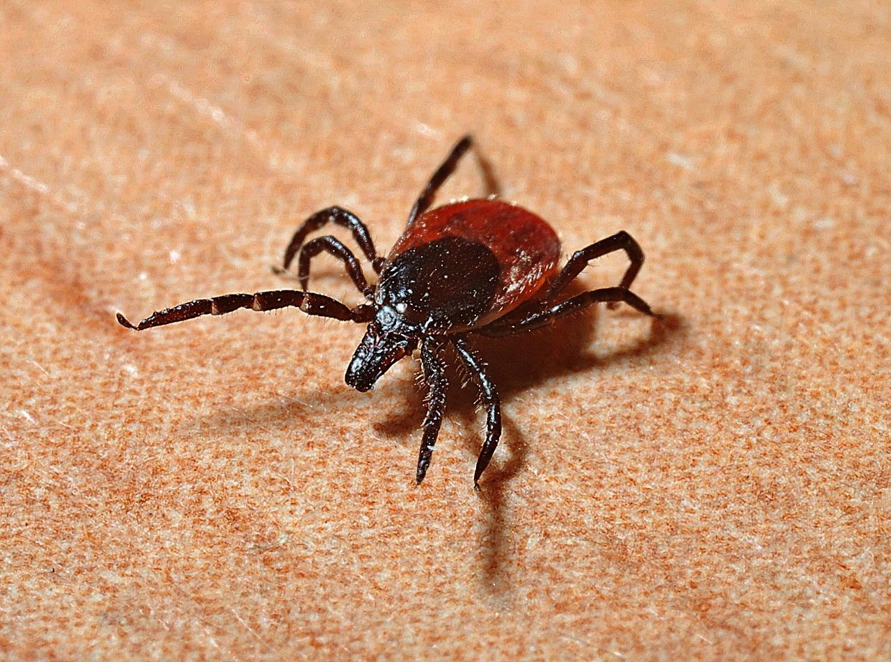 Ticks in the Fall
