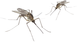 Mosquito Control by East End Tick Control®
