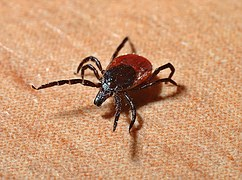 East End Tick Control tick