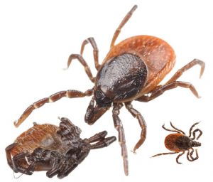 Tick Control and Mosquito spraying by East End Tick Control