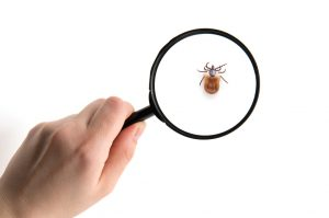 Tick Control from East End Tick Control®
