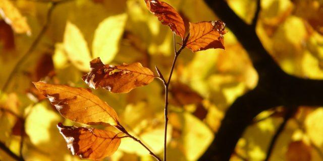 Ticks in Autumn