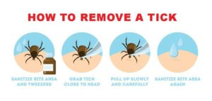 Cartoon graphic of a tick being removed from someone's skin.